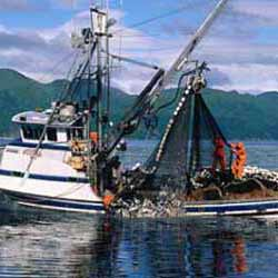Salmon Purse Seiner in Alaska