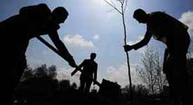 Tree Planting is Needed Now More than Ever with all the Deforestation Photo Button